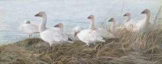 Oies de Neiges (Matinée d'octobre) / Snow Geeses (October morning mist)