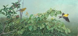 Chardonnerets jaunes- American Goldfinches